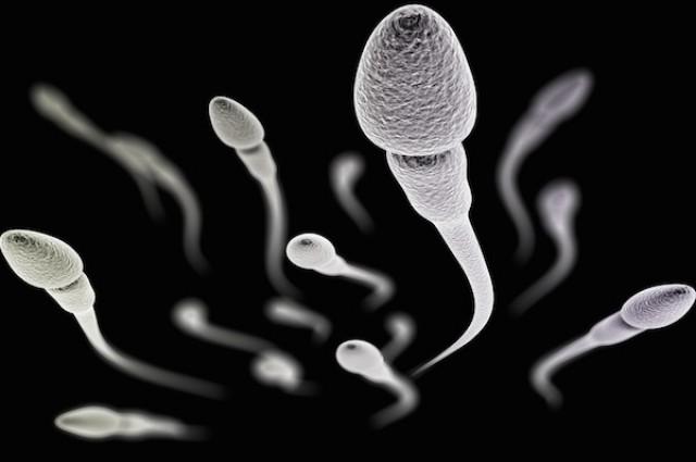 Вучето разсъждава върху вкуса на спермата в условията на стрес (април 2015)